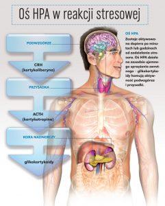 dietetyka szczecin
